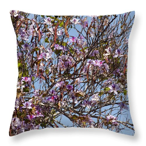 Saucer Throw Pillow featuring the photograph Saucer Magnolia Or Tulip Tree Magnolia X Soulangeana by Allan Hughes