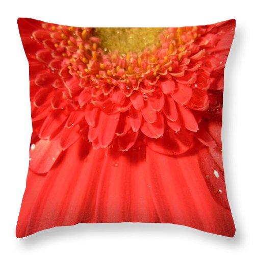 Gerber Photographs Throw Pillow featuring the photograph 3270 by Kimberlie Gerner