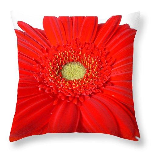 Gerber Photographs Throw Pillow featuring the photograph 3629 by Kimberlie Gerner