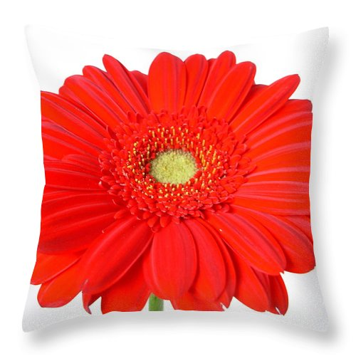 Gerber Photographs Throw Pillow featuring the photograph 3631 by Kimberlie Gerner