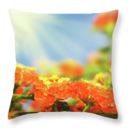 Blossom Throw Pillow featuring the photograph Floral Background. Lantana Flowers by MotHaiBaPhoto Prints