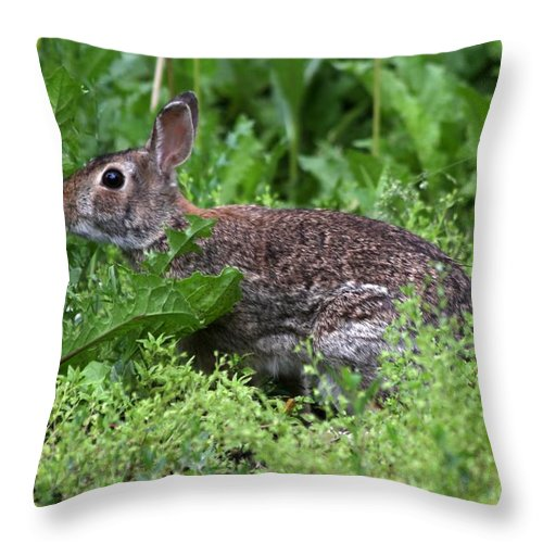 Wildlife Throw Pillow featuring the photograph Rabbit by Lori Tordsen