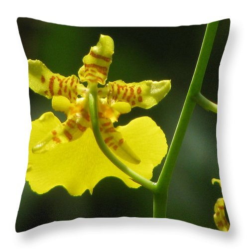 Yellow Throw Pillow featuring the photograph Yellow Orchid by Alfred Ng