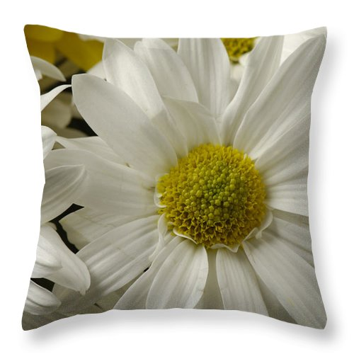 Photography Throw Pillow featuring the photograph A Bouquet Of Chrysanthemums by Joel Sartore