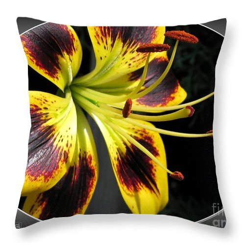 Asiatic Lily Throw Pillow featuring the photograph Asiatic Lily Named Black-eyed Cindy by J McCombie