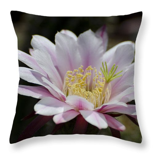 Cactus Throw Pillow featuring the photograph Pink Cactus Flower by Jim And Emily Bush