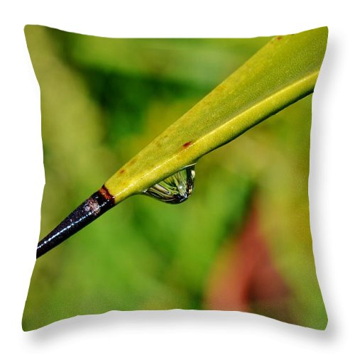 Close Up; Raindrops; Green; Leaf; Reflection; Nature; Plant; Garden; Water; Wet; Droplets; Background; Decorative; Clear; Yuca Palm; Throw Pillow featuring the photograph Raindrops On Leaf by Werner Lehmann