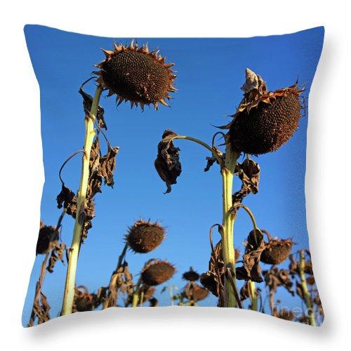 Agriculture Throw Pillow featuring the photograph Sunflowers by Bernard Jaubert