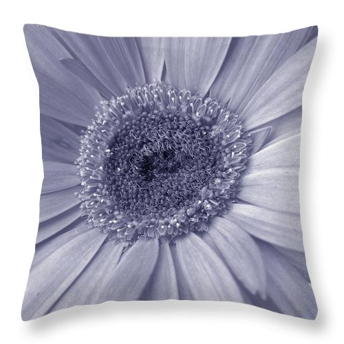 Gerbera Photographs Throw Pillow featuring the photograph 5540c8 by Kimberlie Gerner