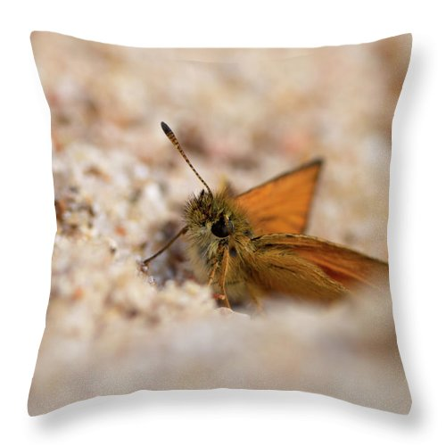 Lehtokukka Throw Pillow featuring the photograph European Skipper by Jouko Lehto