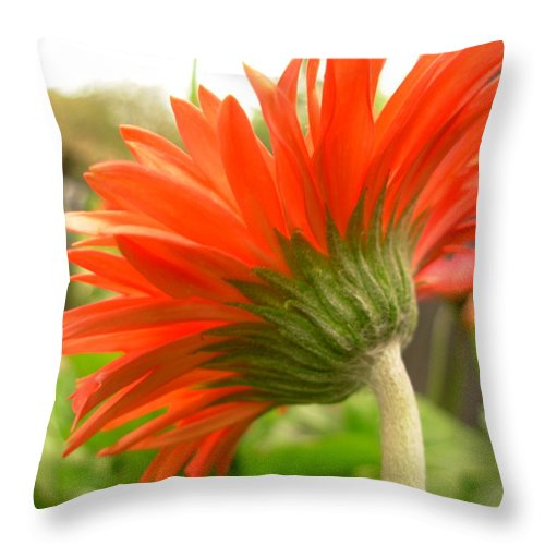 Gerber Photographs Throw Pillow featuring the photograph 6122 by Kimberlie Gerner