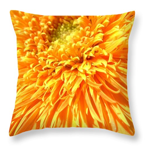 Gerber Throw Pillow featuring the photograph 6229c by Kimberlie Gerner