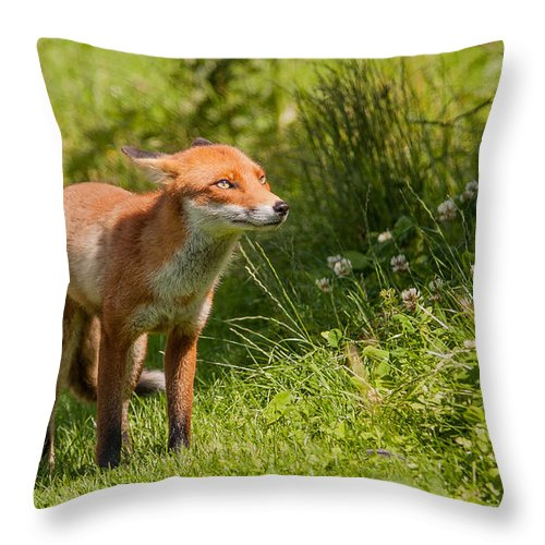 British Wildlife Centre Throw Pillow featuring the photograph A British Red Fox by Dawn OConnor