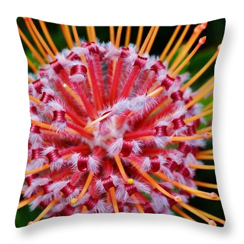 Pincushion; Leucospermum Cuneiforme; Plant; Blossom; Garden; Nature; Beige; Green; Leafs; Common; Flower; Close Up; Bud; Red; Background; Orange; Decorative; Spring; Floral; South Africa; Throw Pillow featuring the photograph Common Pincushion Protea by Werner Lehmann