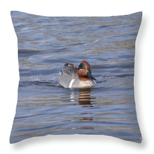 Teal Throw Pillow featuring the photograph Green Wing Teal by Lori Tordsen