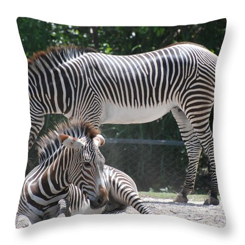Animal Throw Pillow featuring the photograph Zebras by Rob Hans
