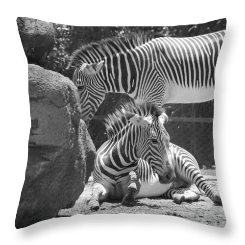 Animal Throw Pillow featuring the photograph Zebras In Black And White by Rob Hans