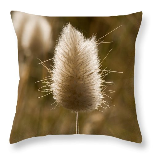 Abstract Throw Pillow featuring the photograph A Beautiful Seed Pod With Beautiful Sun Reflection by U Schade