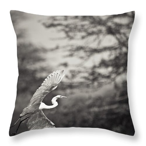 African Throw Pillow featuring the photograph A Bird With A Large Wing Span Takes by David DuChemin