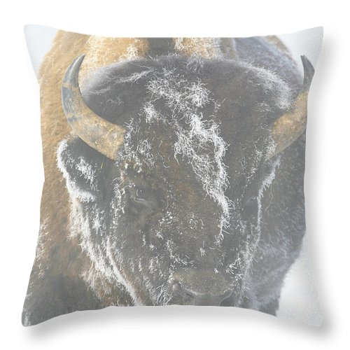 American Bison Throw Pillow featuring the photograph A Bison Covered By Ice And Fog by Drew Rush