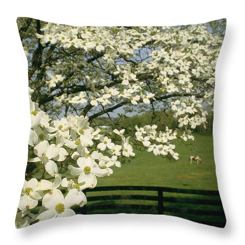 Plants Throw Pillow featuring the photograph A Blossoming Dogwood Tree In Virginia by Annie Griffiths