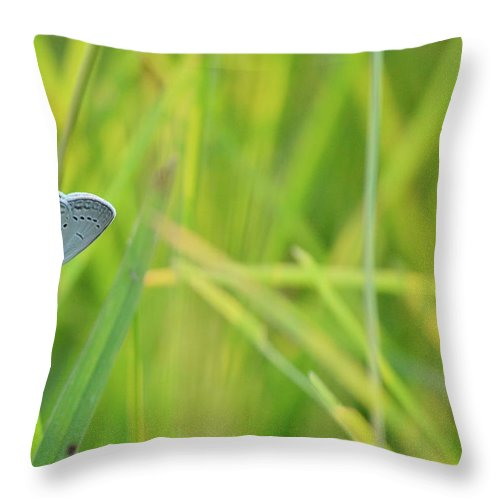 Eastern Tailed Blue Throw Pillow featuring the photograph A Blue And Grass by JD Grimes