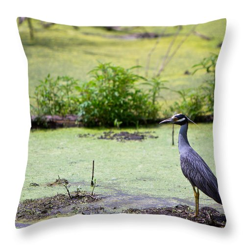 Aligator Throw Pillow featuring the photograph A Blue Bird In A Wetland -yellow-crowned Night Heron by Ellie Teramoto