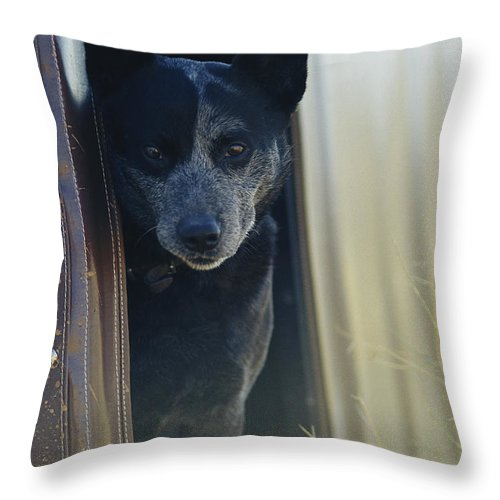 Animals Throw Pillow featuring the photograph A Blue Heeler Cattle Dog Peers by Jason Edwards