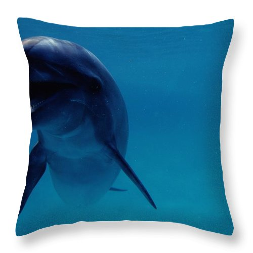 Sea Life Park Hawaii Throw Pillow featuring the photograph A Bottlenose Dolphin Swims In The Blue by Chris Johns