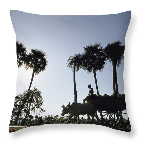 Asia Throw Pillow featuring the photograph A Boy Rides On An Ox-drawn Cart by James P. Blair