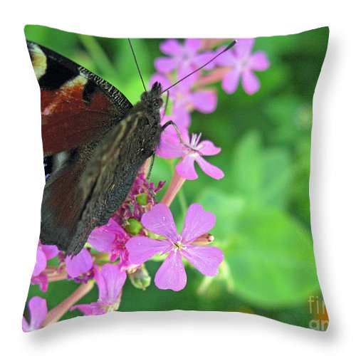 Nature Throw Pillow featuring the photograph A Butterfly On The Pink Flower 2 by Ausra Huntington nee Paulauskaite