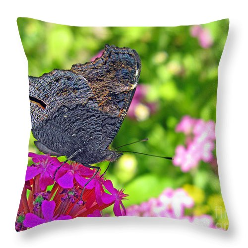 Butterfly Throw Pillow featuring the photograph A Butterfly On The Pink Flower by Ausra Huntington nee Paulauskaite
