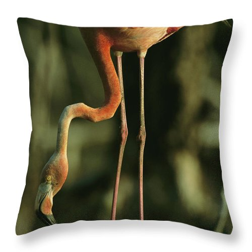 Animals Throw Pillow featuring the photograph A Caribbean Flamingo Stands On Its Nest by Steve Winter