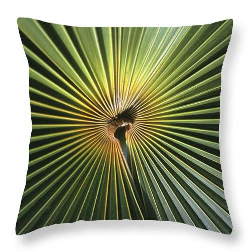 Plants Throw Pillow featuring the photograph A Close View Of A Palm Frond by Ed George