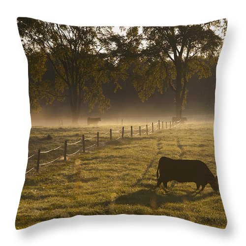 Big Animal Throw Pillow featuring the photograph A Cow Grazing In A Field In The Early by David Chapman