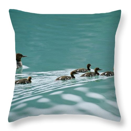 North America Throw Pillow featuring the photograph A Family Of Merganser Ducks Swim by Michael Melford