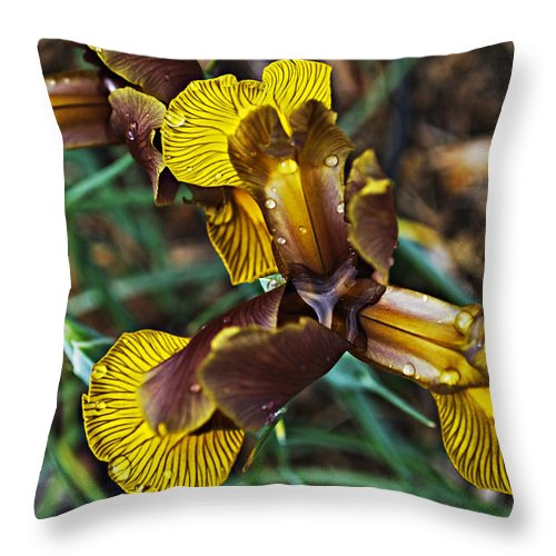 Iris Throw Pillow featuring the photograph A Fine Pair by Christopher Gaston
