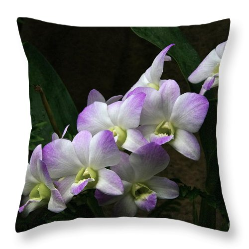 Orchids Throw Pillow featuring the photograph A Flight Of Orchids by Byron Varvarigos