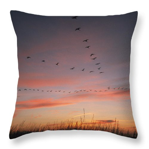 Grus Grus Throw Pillow featuring the photograph A Flock Of Common Cranes Flying by Klaus Nigge