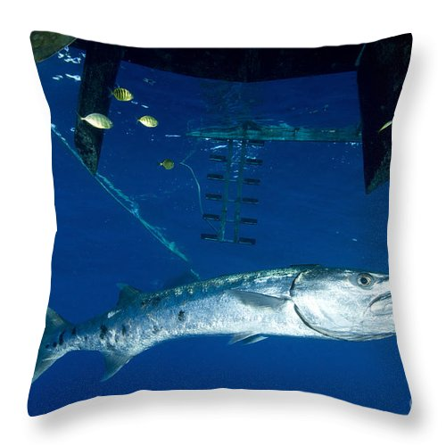 Osteichthyes Throw Pillow featuring the photograph A Great Barracuda Beneath A Boat, Kimbe by Steve Jones