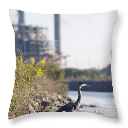 Los Cerritos Wetlands Throw Pillow featuring the photograph A Great Blue Heron Ardea Herodias by Rich Reid