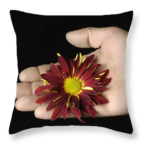 Still Life Views Throw Pillow featuring the photograph A Hand Holding A Red Rover by Joel Sartore