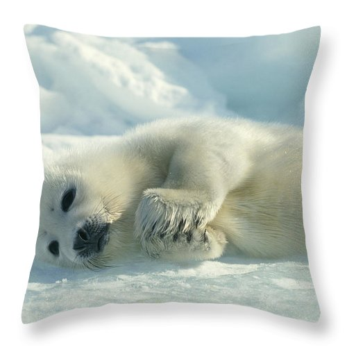 Animals Throw Pillow featuring the photograph A Harp Seal Pup Lies On Its Side by Norbert Rosing