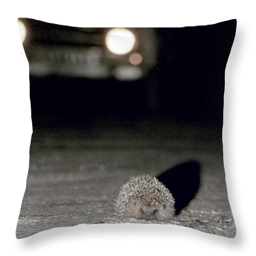 Automobile Throw Pillow featuring the photograph A Hedgehog by Granger