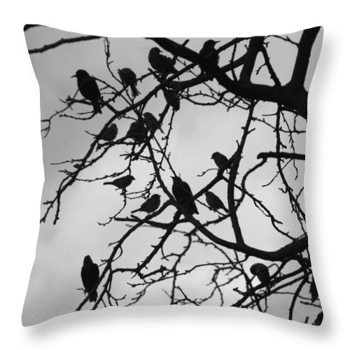 Starling Throw Pillow featuring the photograph A Hitchcock Moment by Chris Day