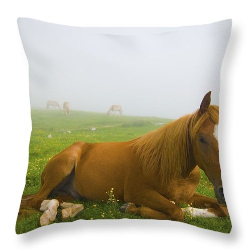 Big Animal Throw Pillow featuring the photograph A Horse Sitting On The Grass In A by Laura Ciapponi