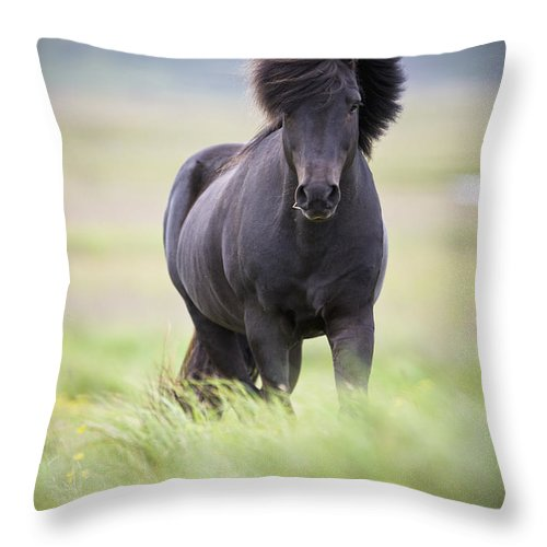 Blowing Throw Pillow featuring the photograph A Horse With Its Mane Blowing In The by David DuChemin
