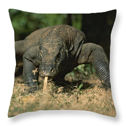 Asia Throw Pillow featuring the photograph A Komodo Dragon Sensing The Air by Tim Laman