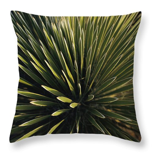 Plants Throw Pillow featuring the photograph A Lechuguilla Plant In The Desert by Stephen Alvarez