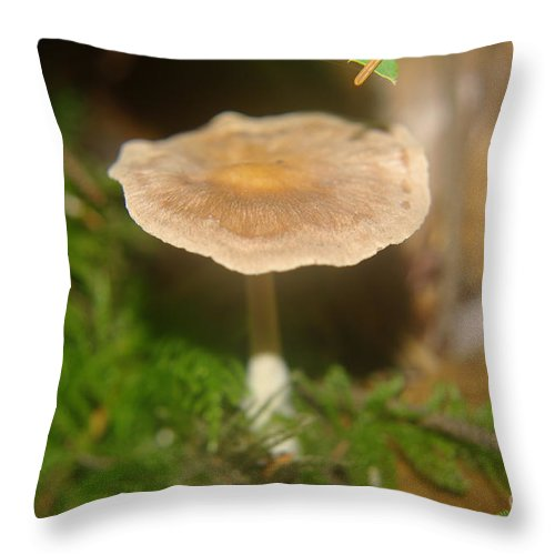 Mushrooms Throw Pillow featuring the photograph A Little Mushrrom by Jeff Swan